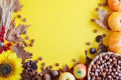 黄色秋天背景用南瓜和向日葵 免版税库存照片