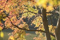 黄色秋天结构树 免版税图库摄影