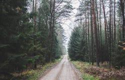 绿色秋天 免版税库存图片