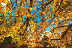 黄色秋季背景离开反对蓝天 免版税库存照片