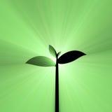 年轻绿色种子植物光火光 库存照片