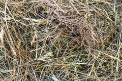 黄色秸杆干草织地不很细背景 库存照片