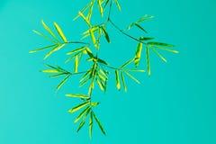 绿色竹叶子和天空葡萄酒过滤样式 图库摄影