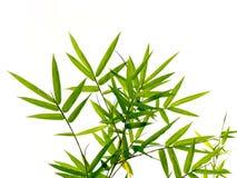 绿色竹子叶子在自然森林背景中 免版税图库摄影
