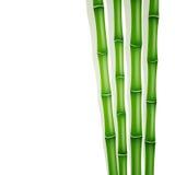 绿色竹子 免版税库存图片