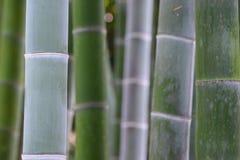 绿色竹树在日本 免版税图库摄影