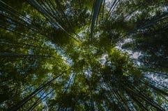 绿色竹森林 库存照片