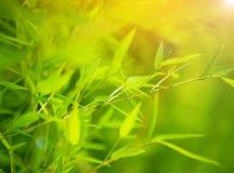绿色竹背景 库存图片