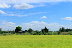 绿色米调遣有蓝天的泰国 图库摄影