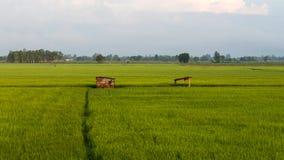 绿色米领域和一个老小屋 免版税库存照片