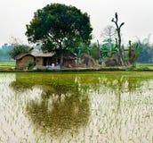 绿色米领域和小屋 免版税库存照片