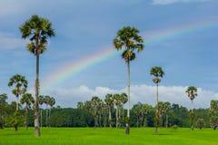 绿色米领域和彩虹 免版税库存照片