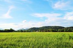 绿色米领域,山,蓝天,云彩 免版税图库摄影