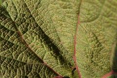绿色红色叶子 免版税库存图片