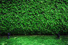 绿色纹理和sportlight背景 图库摄影
