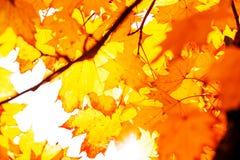 黄色纹理留下秋天叶子背景 免版税库存图片