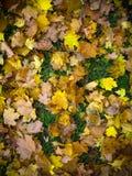 黄色纹理留下秋天叶子 免版税库存照片