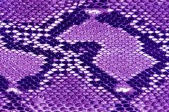 紫色纹理皮革 免版税库存照片