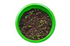 绿色罐的小植物在白色背景 免版税库存图片