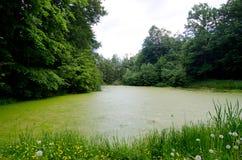 绿色肮脏的池塘 免版税库存图片