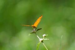 绿色背景和蝴蝶 免版税库存照片