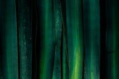 绿色背景由大叶子制成 免版税库存图片