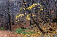 黄色背景纹理留下秋天 免版税库存照片