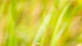 黄色背景绿草,弄脏黄色 图库摄影
