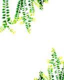 绿色背景 免版税库存照片