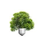 绿色能量eco概念,生长在电灯泡,树孤立外面的树 免版税库存照片