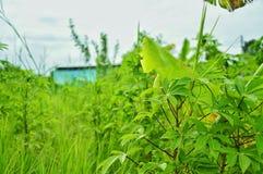 绿色自然树为生活 免版税库存照片