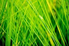 绿色自然长的草背景 库存图片