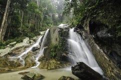 绿色自然forestDead落的树围拢的美丽的瀑布在水中, 库存照片