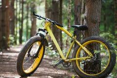 黄色自行车fatbike在一个具球果森林里 免版税库存图片