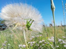 绿色臭虫和花 库存照片