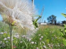绿色臭虫和花 免版税库存图片