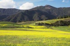 黄色芥末和山,上部Ojai加利福尼亚,美国 免版税库存照片