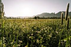 绿色芦苇渔kochelsee巴伐利亚山 库存图片