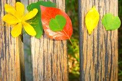 黄色花、绿色叶子、黄色叶子和红色叶子在一张木桌上 库存照片