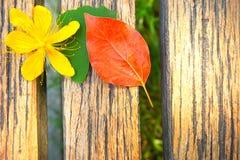 黄色花、绿色叶子和红色叶子在一张木桌上 图库摄影