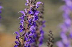 紫色花上面 免版税库存图片