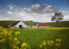 黄色花农场 库存图片