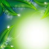 绿色花卉传染媒介背景 库存照片