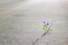 紫色花卉生长在高明的街道,软的焦点上 免版税图库摄影