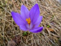 紫色花和分支 免版税图库摄影