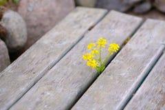 黄色花和土气木头 库存图片