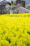 黄色花和房子 免版税库存照片