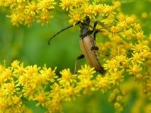 黄色花和昆虫 免版税库存照片