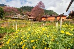 黄色花和桃红色樱花有橙色房子的 免版税库存图片