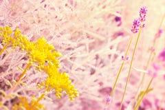 黄色花和淡紫色 库存图片